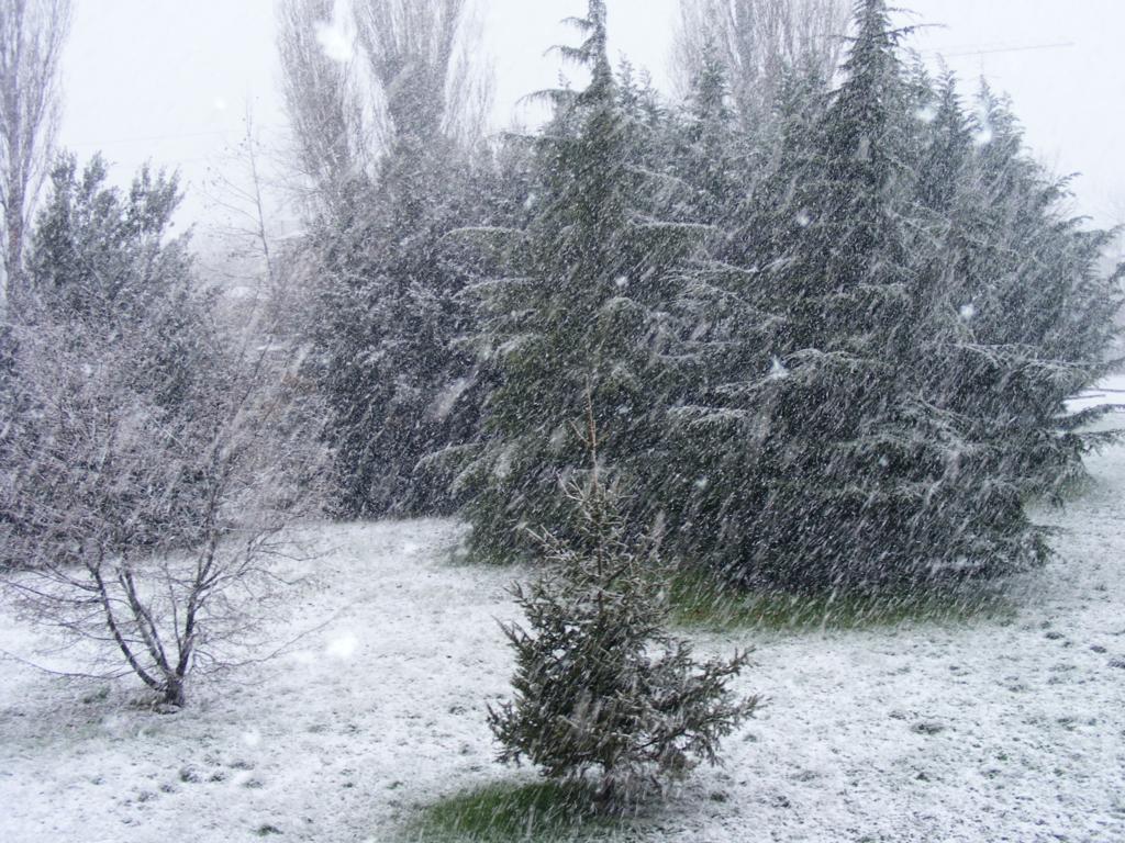 Foto della nevicata del 31-01-2010 Paolo61 con la collaborazione di Niko e Andrew183-dscf0797_1024x768.jpg