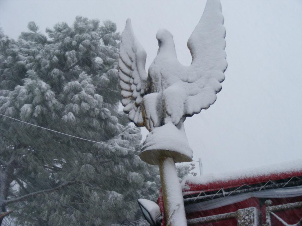 Foto della nevicata del 31-01-2010 Paolo61 con la collaborazione di Niko e Andrew183-dscf0837_1024x768.jpg