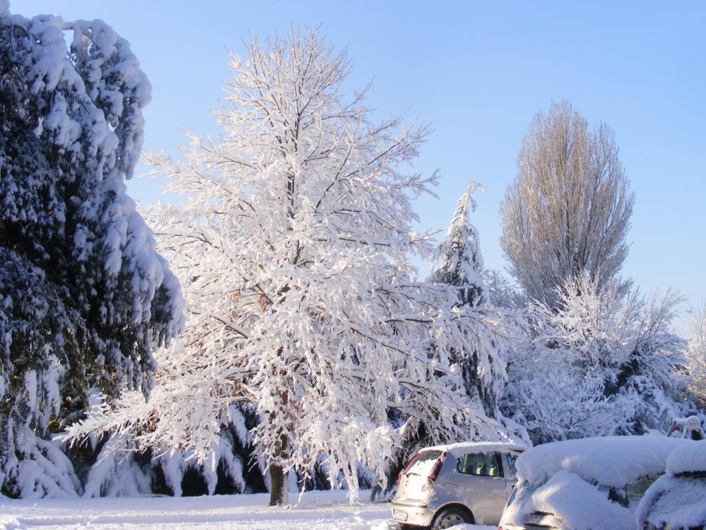 Foto della nevicata del 31-01-2010 Paolo61 con la collaborazione di Niko e Andrew183-dscf1099_1024x768.jpg
