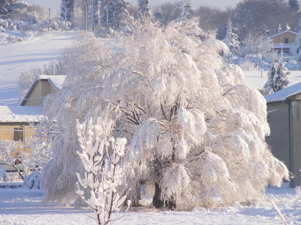 Foto della nevicata del 31-01-2010 Paolo61 con la collaborazione di Niko e Andrew183-dscf1104_1024x768.jpg