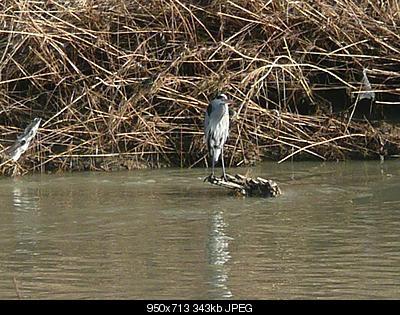 Per chi si intende di uccelli-p1240994.jpg
