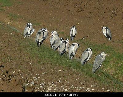 Per chi si intende di uccelli-p1250003.jpg