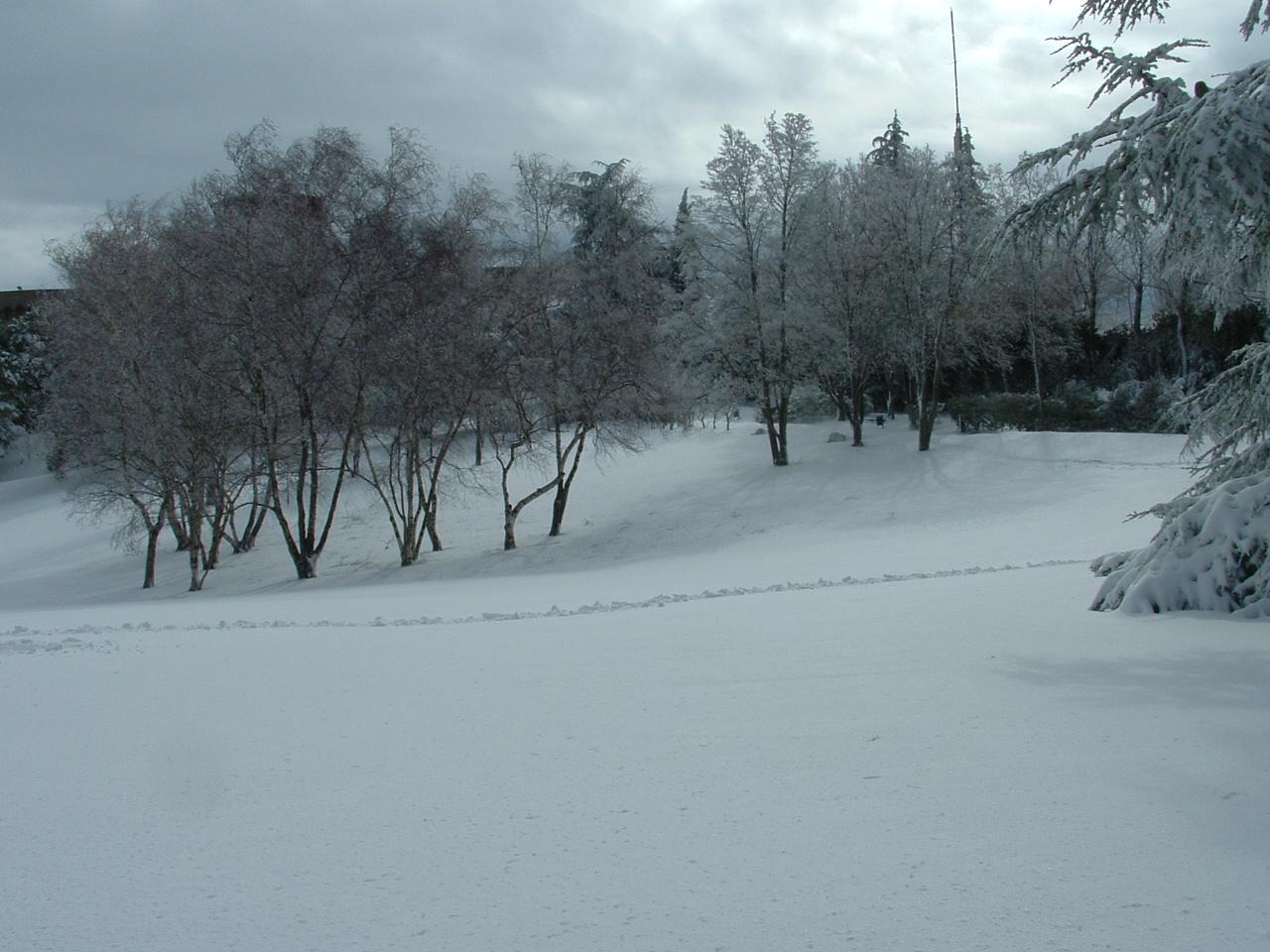Volterra fotoreportage neve 9/10 marzo 2010..l'apoteosi nevosa!!-foto-mattina-volterra-10-marzo-2010-2-1-.jpg