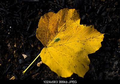 Scatti di fine autunno..-6389491749_cd6eaeab24_b.jpg