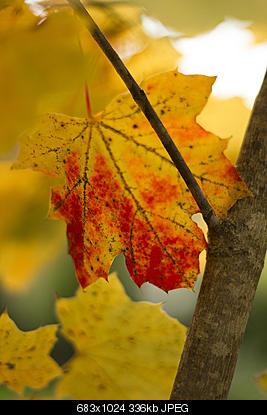 Scatti di fine autunno..-6389491707_14d2301b29_b.jpg