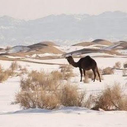 Meteo in Tunisia-neige-dans-sahara-430x430.png