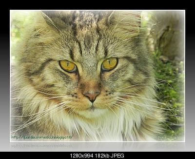 tutti i Vostri gatti  qui-image2.jpg