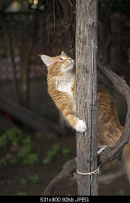 tutti i Vostri gatti  qui-imgp1862.jpg
