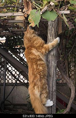 tutti i Vostri gatti  qui-imgp1864b.jpg