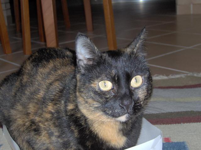 tutti i Vostri gatti  qui-bibi-4.jpg