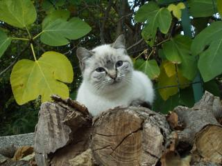 tutti i Vostri gatti  qui-pa300023.jpg