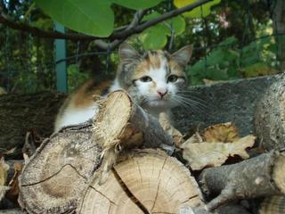 tutti i Vostri gatti  qui-pa300024.jpg
