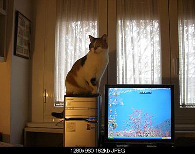 tutti i Vostri gatti  qui-2.jpg