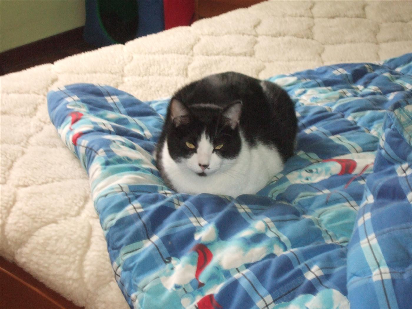 tutti i Vostri gatti  qui-dscf0322.jpg