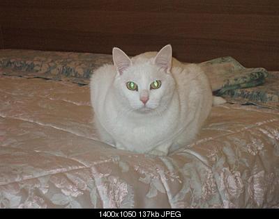 tutti i Vostri gatti  qui-dscf0323.jpg