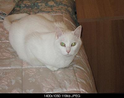 tutti i Vostri gatti  qui-dscf0324.jpg