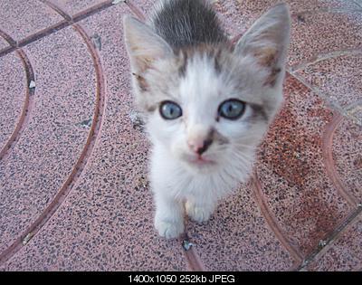 tutti i Vostri gatti  qui-dscf2226.jpg