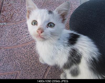 tutti i Vostri gatti  qui-dscf2228.jpg