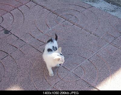 tutti i Vostri gatti  qui-dscf2232.jpg