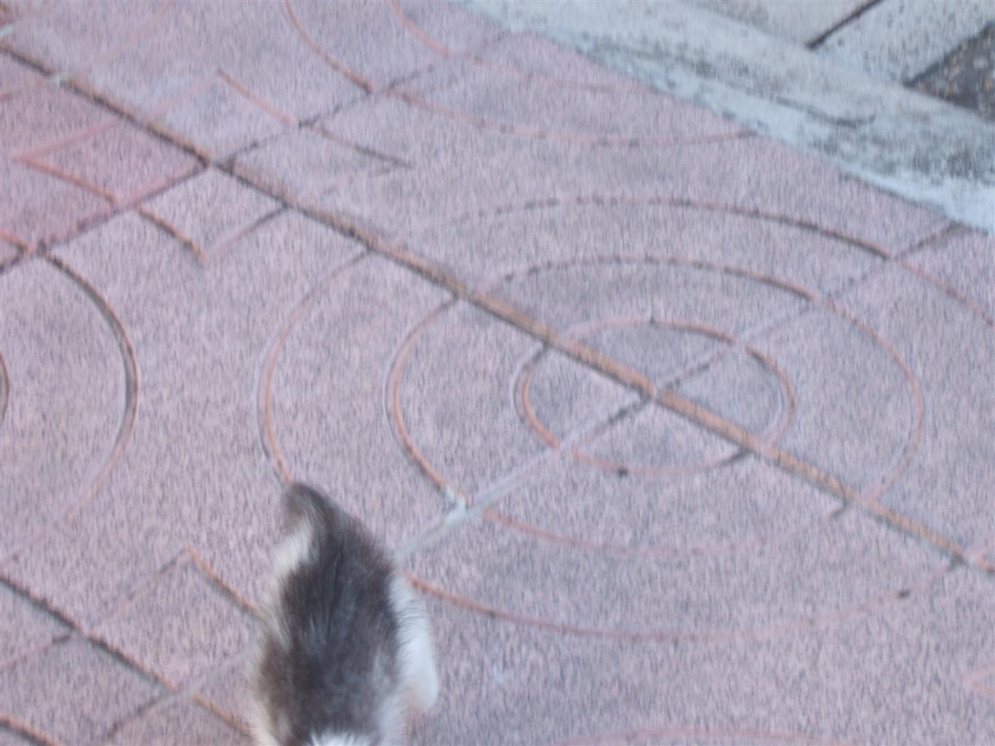 tutti i Vostri gatti  qui-dscf2233.jpg