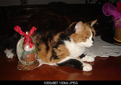 tutti i Vostri gatti  qui-lilu-meteo1.jpg