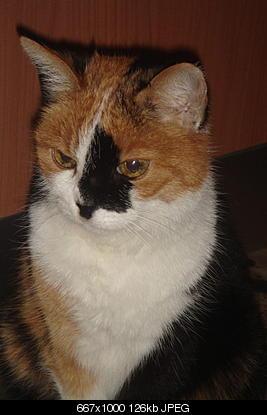 tutti i Vostri gatti  qui-lilu-meteo2.jpg