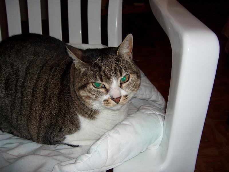 tutti i Vostri gatti  qui-cimg0015.jpg
