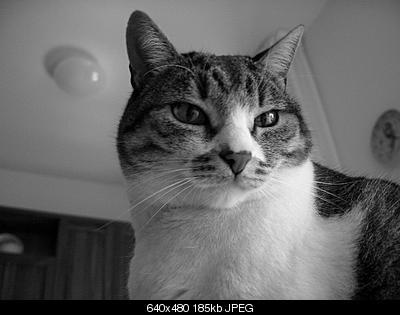 tutti i Vostri gatti  qui-cimg0087.jpg