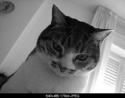tutti i Vostri gatti  qui-cimg0088.jpg
