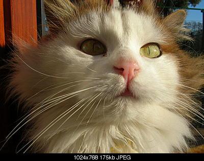 tutti i Vostri gatti  qui-06.01.06_pranzo-epifania-010.jpg