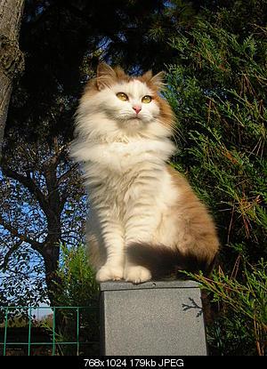 tutti i Vostri gatti  qui-gatti_08.11.05-014.jpg