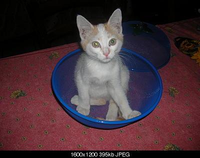 tutti i Vostri gatti  qui-06.07.02_taou-blanc-001.jpg