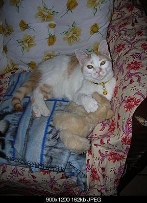 tutti i Vostri gatti  qui-06.10.08_cima-vallonetto-104.jpg