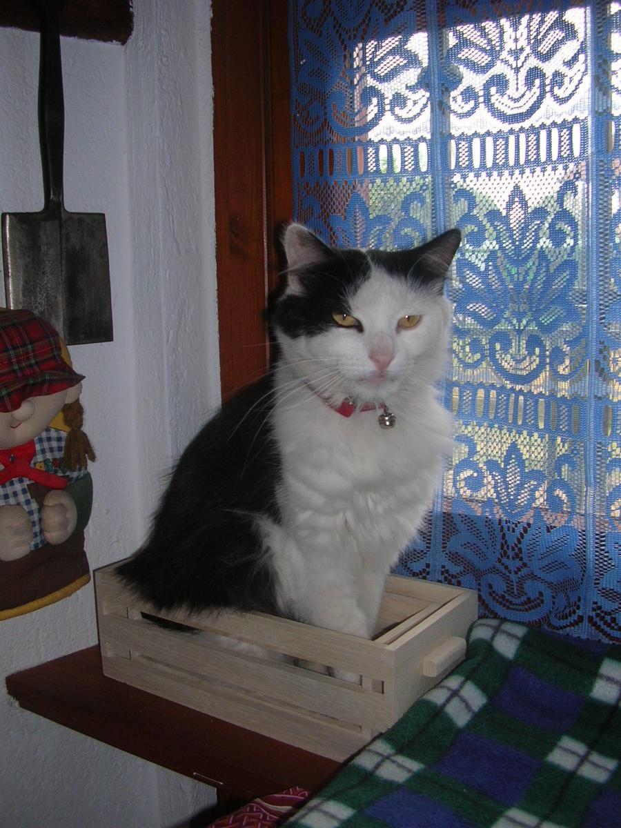 tutti i Vostri gatti  qui-06.08.15_bonneval-005.jpg