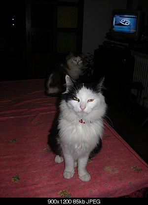 tutti i Vostri gatti  qui-06.10.27_gatti-002.jpg