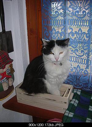 tutti i Vostri gatti  qui-06.08.15_bonneval-007.jpg