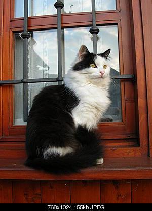 tutti i Vostri gatti  qui-dscn0199.jpg