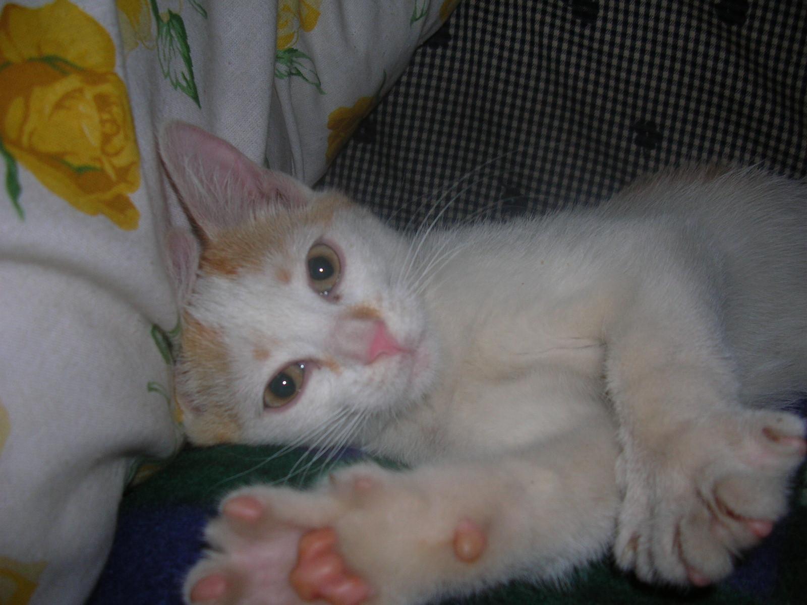 tutti i Vostri gatti  qui-06.06.27_yuri-007.jpg