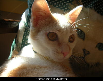 tutti i Vostri gatti  qui-06.08.07_siccita-005.jpg