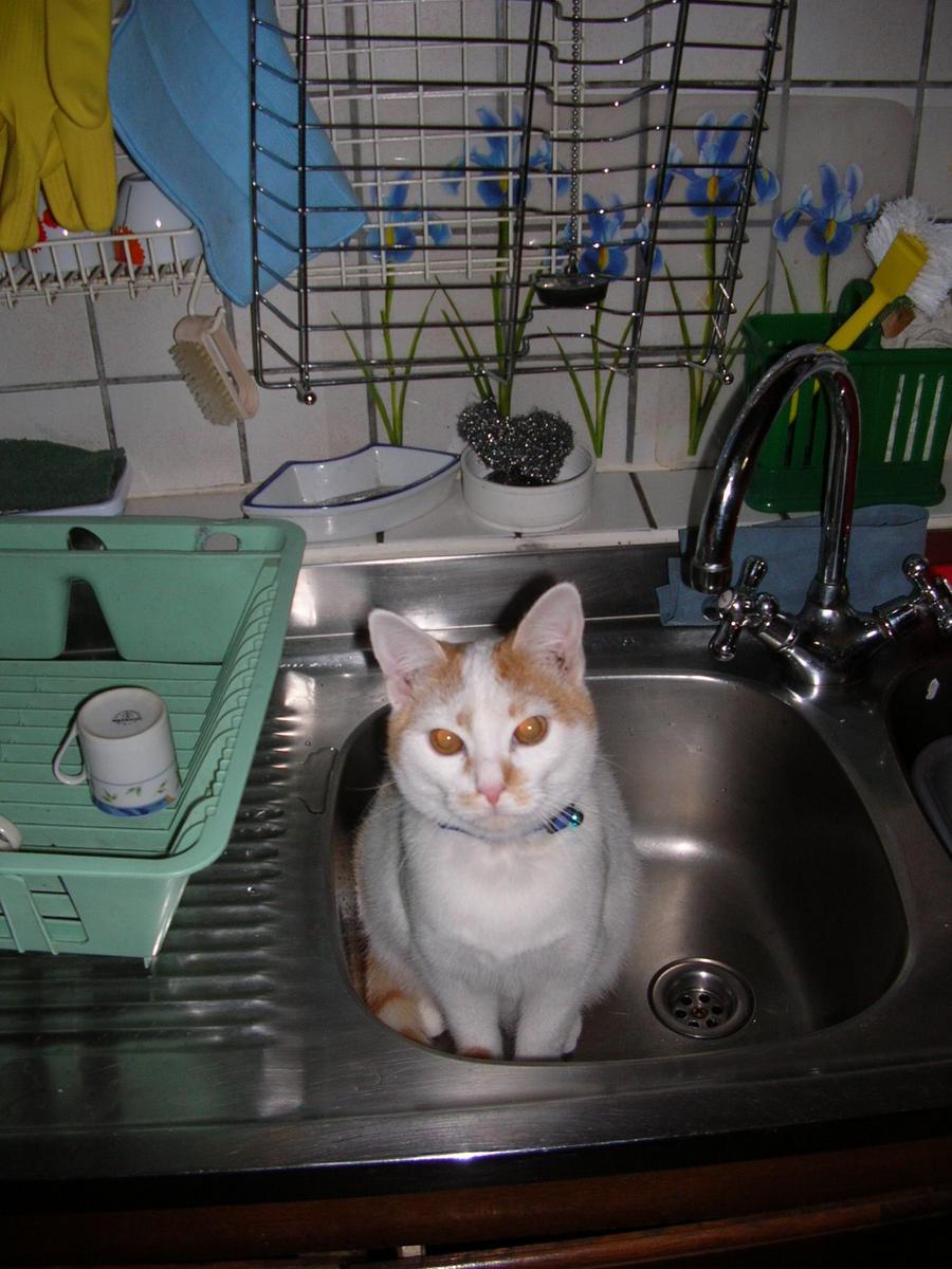 tutti i Vostri gatti  qui-06.10.27_gatti-007.jpg