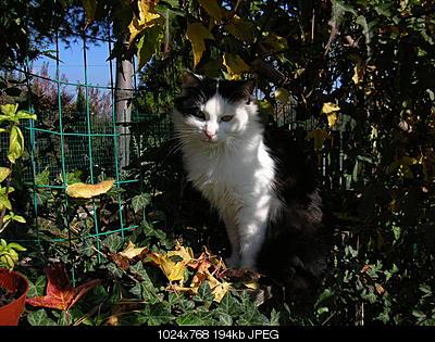 tutti i Vostri gatti  qui-dscn0137.jpg