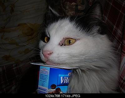 tutti i Vostri gatti  qui-gatti-10.04.05-019.jpg