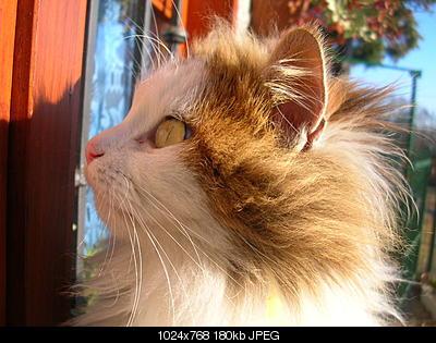 tutti i Vostri gatti  qui-06.01.06_pranzo-epifania-012.jpg