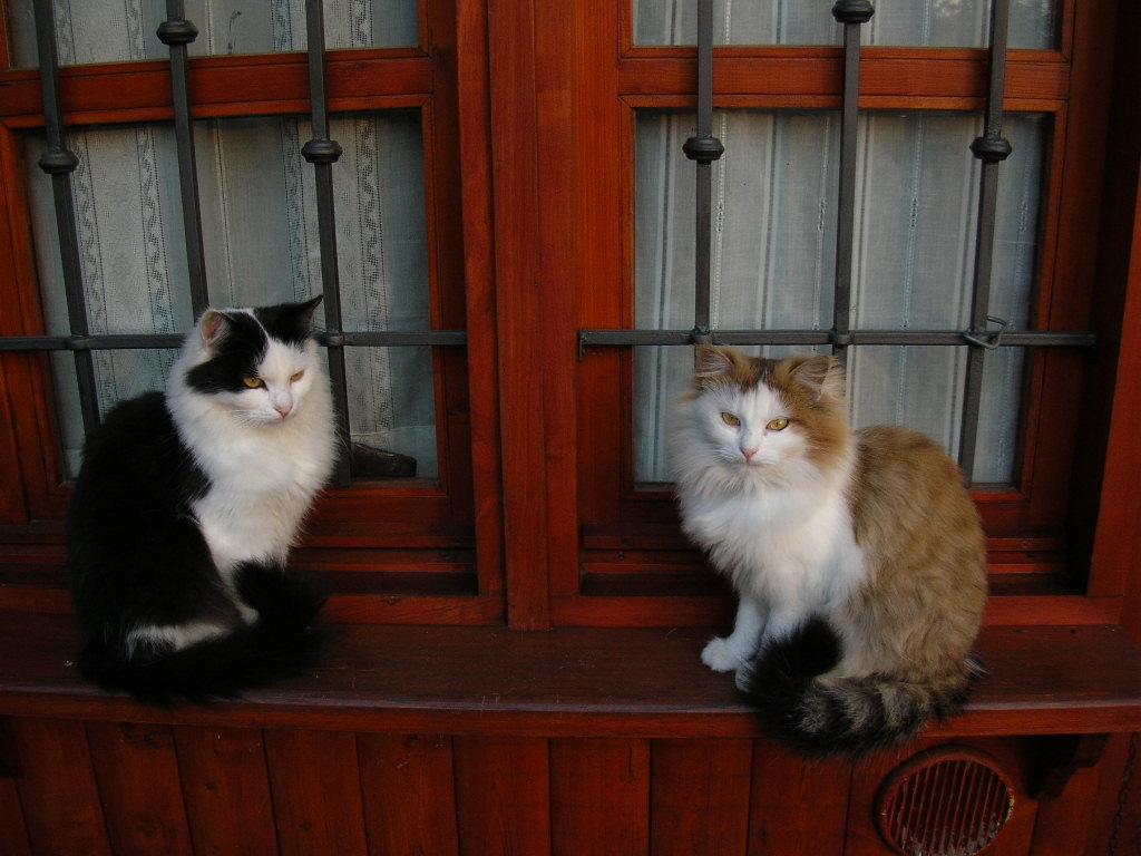 tutti i Vostri gatti  qui-dscn0196.jpg