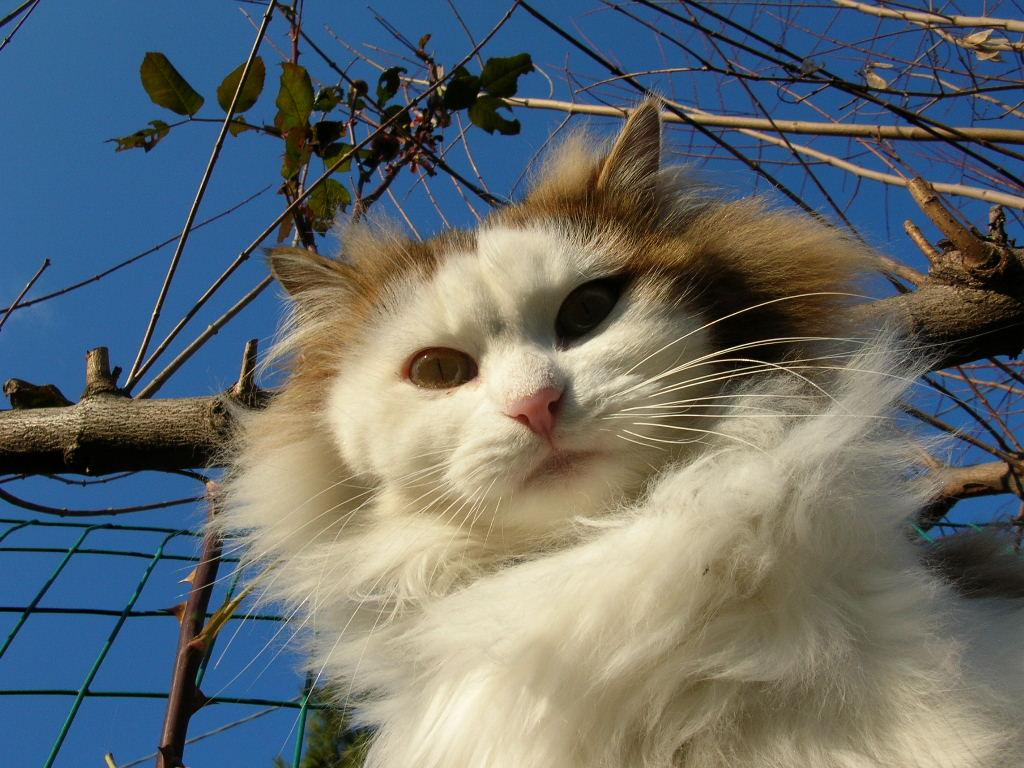 tutti i Vostri gatti  qui-dscn0848.jpg