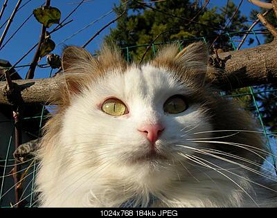 tutti i Vostri gatti  qui-dscn0854.jpg