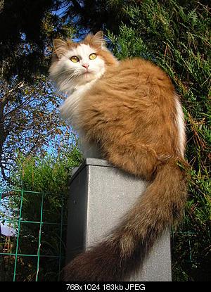 tutti i Vostri gatti  qui-gatti_08.11.05-012.jpg
