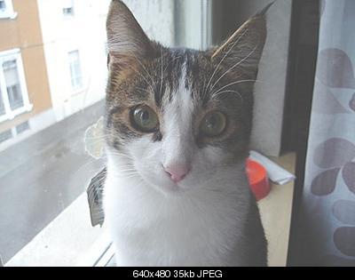 tutti i Vostri gatti  qui-dsc01236.jpg