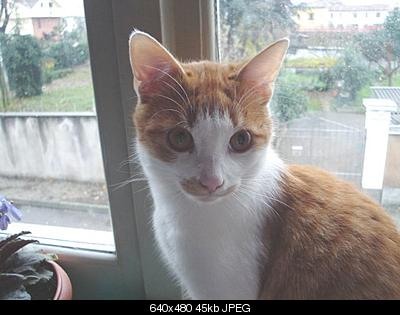 tutti i Vostri gatti  qui-dsc01244.jpg