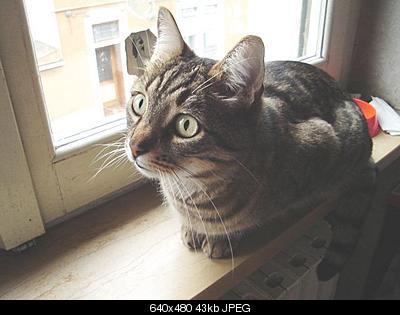 tutti i Vostri gatti  qui-dsc01248.jpg